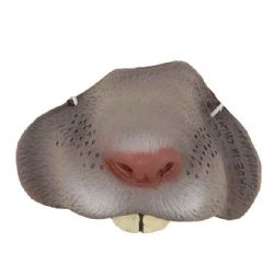ANIMALS -  GREY MOUSE NOSE