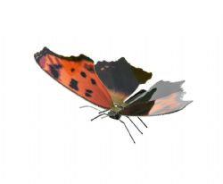 BUTTERFLIES -  EASTERN COMMA - 1 SHEET