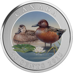 DUCKS OF CANADA -  CINNAMON TEAL -  2015 CANADIAN COINS 05