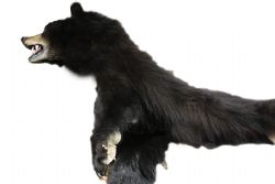 FOURRURE -  OPEN MOUTH BROWN BEAR WITH HEADPIECE