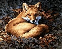 PAINT WORKS -  SUNLIT FOX (20