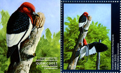 QUEBEC WILDLIFE HABITAT CONSERVATION -  2011 RED-HEADED WOODPECKER (UNSIGNED) 24