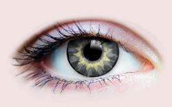 THEATRICAL CONTACT LENSES -  DELIGHTFUL - CENDRE (90 DAYS)