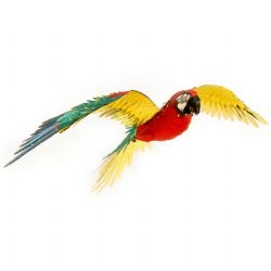 ANIMAUX -  JUBILEE MACAW - 2 5/8 FEUILLES
